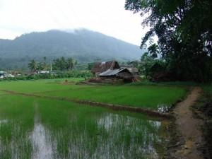 rice patties sapphire mining